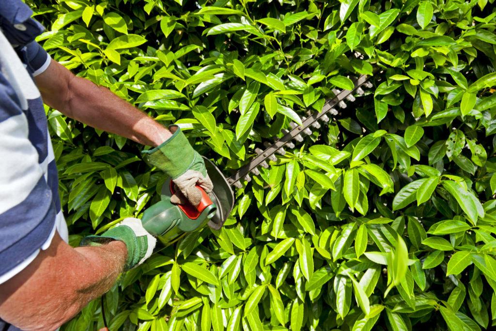 Você sabe como deve ser feita a manutenção de áreas verdes?